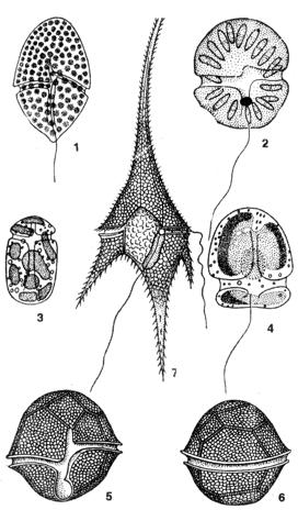 пресноводные водоросли: